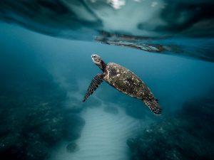 PAC 160 – La pollution mortifère des océans par les microplastiques Le rapport de l'UICN, 22 fév. 2017