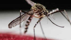 PAC 142 – The Low-key Trajectory of a Major Health Risk The Zika Virus Epidemic Disease