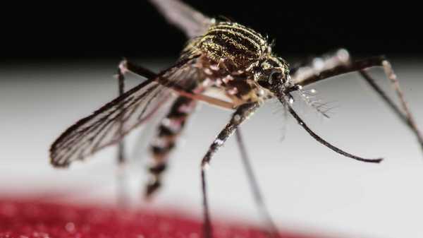 PAC 142 – La trajectoire discrète d'un péril sanitaire L'épidémie de virus Zika