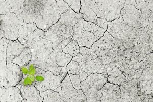 PAC 155 – La diplomatie climatique des métropoles mondiales Le sommet des maires pour le climat, Mexico